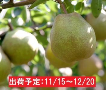 11~12月 蔵王産 贈答規格 ラ・フランス約5kg 不忘果樹園直送