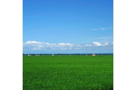 大潟村産あきたこまち特別栽培玄米5kg+やわらか有機玄米1kg 大潟村カントリーエレベーター公社 【1071240】