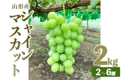 甘く大きな緑の粒が評判のシャインマスカット秀2kg
