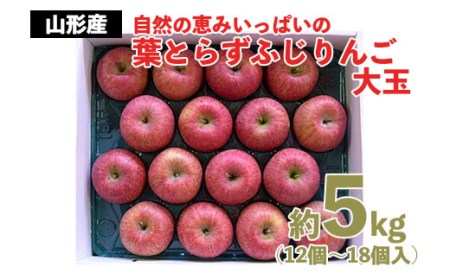 FY20-568 自然の恵みいっぱいの葉とらずふじりんご 大玉 約5kg
