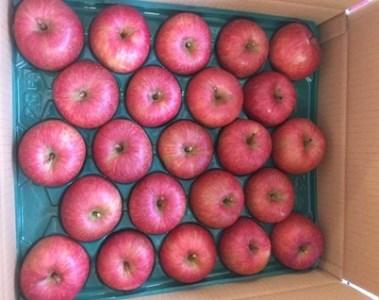 FY18-036 山形市産 こうとくりんご 約5㎏