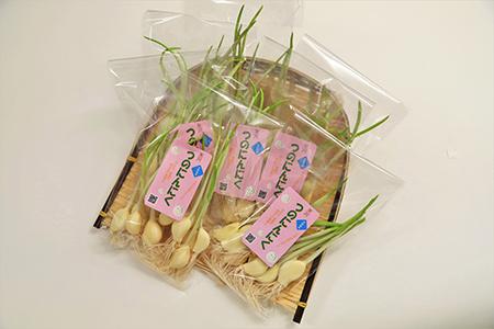 《根っこも食べれる!》つのにんにく詰合せ(10本入り)×7袋_発芽にんにく