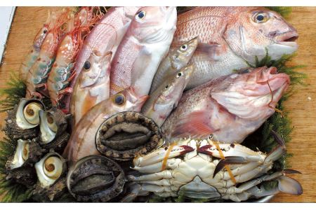 SA0210 あみえびの魚醤旨み調味料4点セット