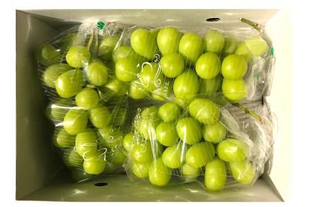 H104 【食べて応援】シャインマスカット約2kg