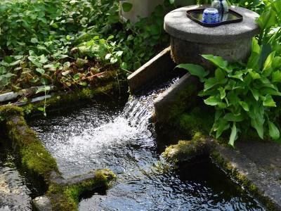 A-0073 大富地区『どっこん水』の恵み(ニジマス・わさび)セット
