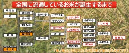 【新型コロナ支援】令和2年産 庄内町産はえぬき10kg