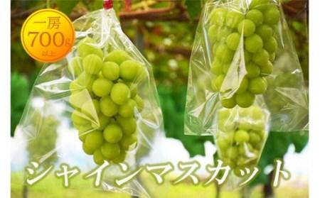 No.0949【先行予約】シャインマスカット(1房)