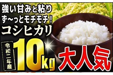モチモチ食感っ!!令和2年度産【コシヒカリ】10kg