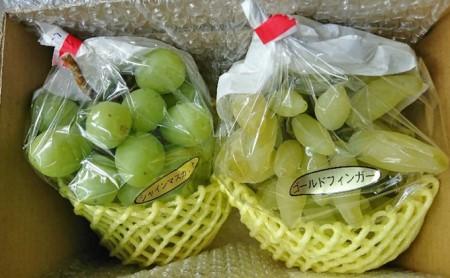 飯田葡萄農園 おまかせ食べ比べぶどうセット 1.5kg箱