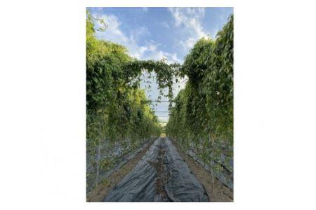 O-15 エコファーム星山の自然薯 1.1㎏