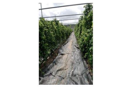 AT-7 伊藤農園の自然薯カット 約700g