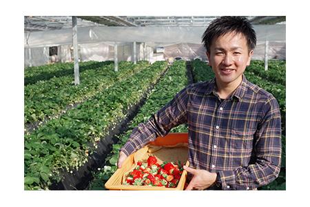 【2609-0069】【先行予約】澳原いちご農園の朝摘みとちおとめ