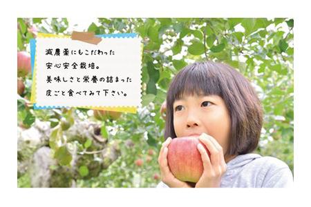 【2609-0060】【期間限定】樹上完熟「葉取らずサンふじ」10kg