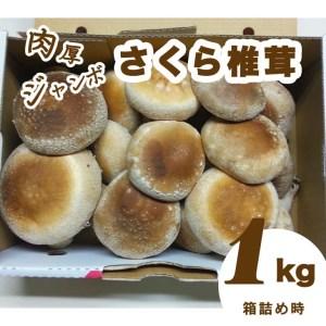 """【ふるさと納税】肉厚ジャンボな""""さくら椎茸""""1kg箱詰め"""