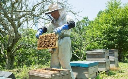 富岡国産純粋アカシア蜂蜜 1000g