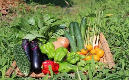 GP(元氣パワー)野菜セット