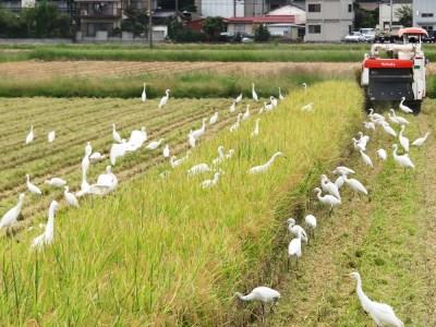 【2622-0077】【新米】【定期便】(6か月連続お届け)低農薬栽培のコシヒカリ4.5㎏×2袋【2021年9月中旬以降配送】