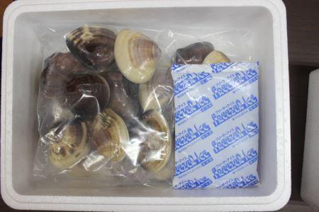 九十九里産はまぐり 特大2kg(およそ14~20粒) ※沖縄県、北海道、九州、離島への発送不可