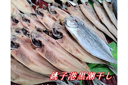 銚子港黒潮干し 訳あり干物 大漁詰め 50枚