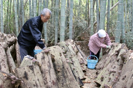 ◇加藤さんちの【原木栽培】干ししいたけ400g(小分けタイプ)