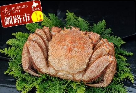 [Ka403-B032]【ビッグな800gの毛蟹!!】ボイル毛ガニ800g×1尾