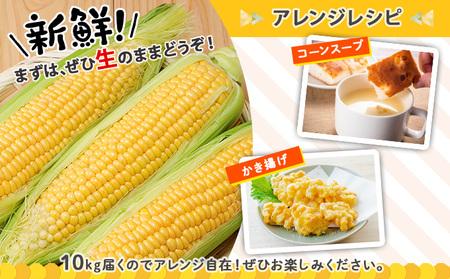 道塚農園のイエローとうきび サニーショコラL-LL 18~20本 約10kg