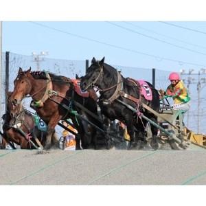【北海道帯広】世界にたったひとつ!ばんえい競馬 個人冠協賛レース【1205457】