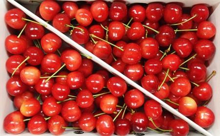 [№5613-0002]峠のふもと紅果園の大玉さくらんぼバラ詰め800g