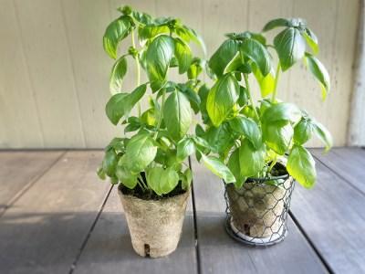 1-91食彩GARDEN三浦やさい栽培キット&旬野菜