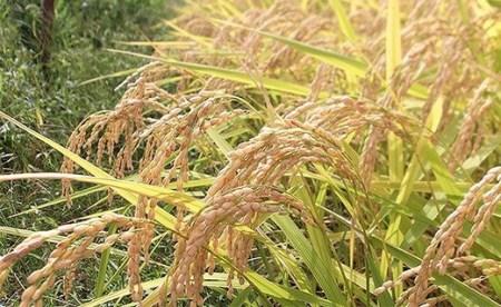 75-2N101新潟県長岡産特別栽培米コシヒカリ10kg(5kg×2)