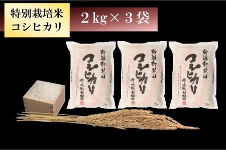 D08【令和2年産米!】 特別栽培米コシヒカリ