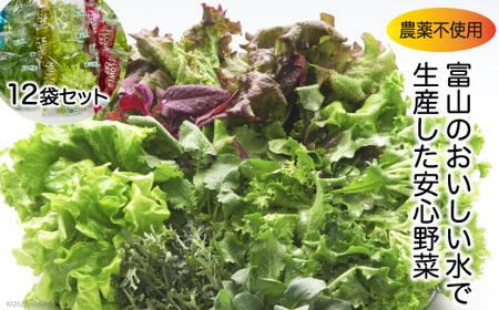 [№5705-0008]富山のおいしい水で生産した安心野菜