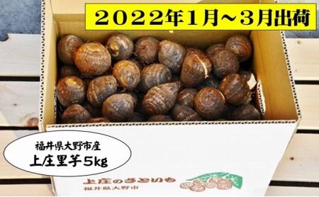 【2022年発送分】上庄さといも5kg 日本一の味をめざす特別栽培里芋