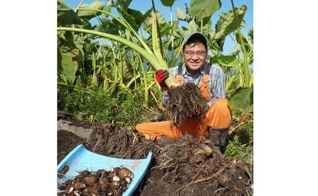 【年内お届け】無農薬で作った上庄さといも4kg 日本一の味をめざす特別栽培里芋 クレジット限定
