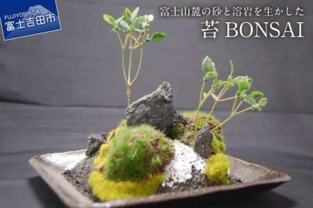 富士山麓の砂と溶岩を使った『和モダン 創作 苔BONSAI 』(大)〈角皿・古瀬戸〉