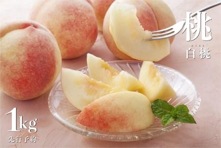果肉が緻密で歯ごたえのある食感が特徴の白桃系約1kg