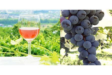 1-3-9 ストレート果汁100%ジュース「南アルプスのマスカット・ベリーA」2本セット