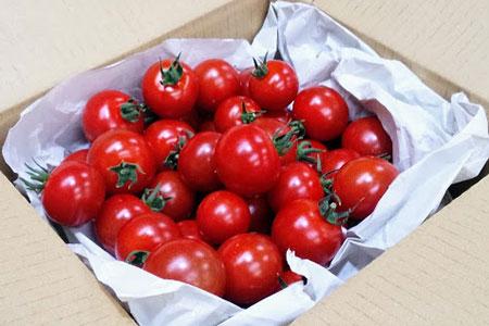 フルーツトマト太陽のめぐみ1キログラム