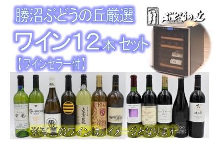 O-601.勝沼ぶどうの丘厳選ワイン12本セット【ワインセラー付】