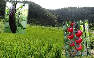001-043 橋原蛍米+季節野菜セット