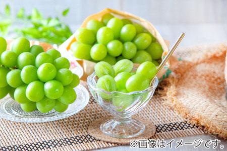 ☆先行予約【新鮮果実】人気のシャインマスカット 約1.5kg