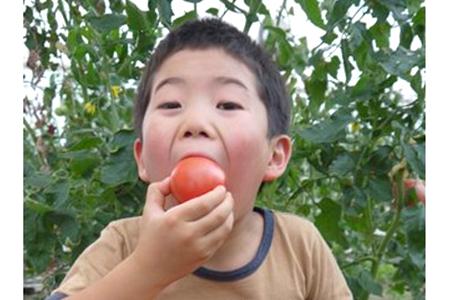 【AB-03】アルプスイーナちゃんトマト