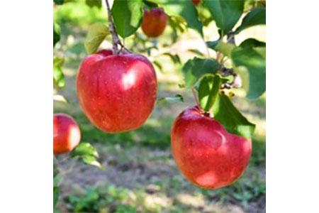 【AB-27】【数量限定!】あいかの香り3キロ 信州が生んだ希少なりんご(リンゴ・林檎)
