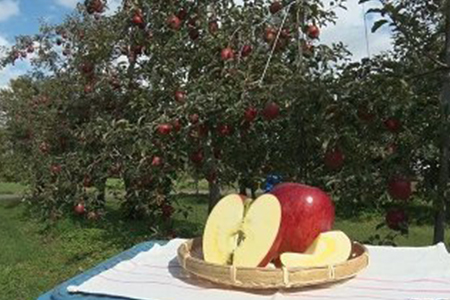 【AB-31】【数量限定!】信州産おまかせりんご5キロ(リンゴ・林檎)