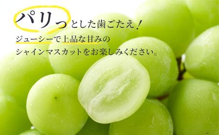 【特選大粒】冬のシャインマスカット 2房(クリスマスシャイン)