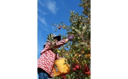 【ふるさと納税】サンふじリンゴ(5kg)(予約制)
