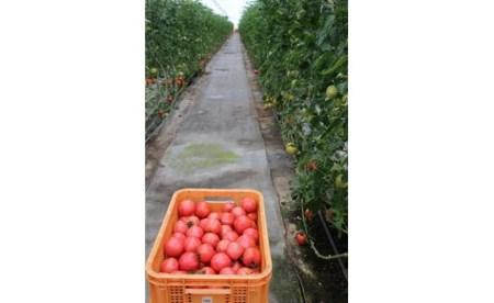 【ふるさと納税】城倉さんちのトマト(4kg)