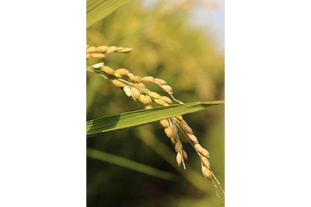 【2624-0040】【令和元年産】北斗米ゆきのつや 10kg(5kg×2袋)