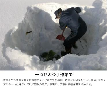 【数量限定!】信州おたり雪中キャベツ2玉(各2kg以上)