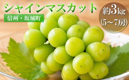 宮原ぶどう園のシャインマスカット 約3kg(5~7房)